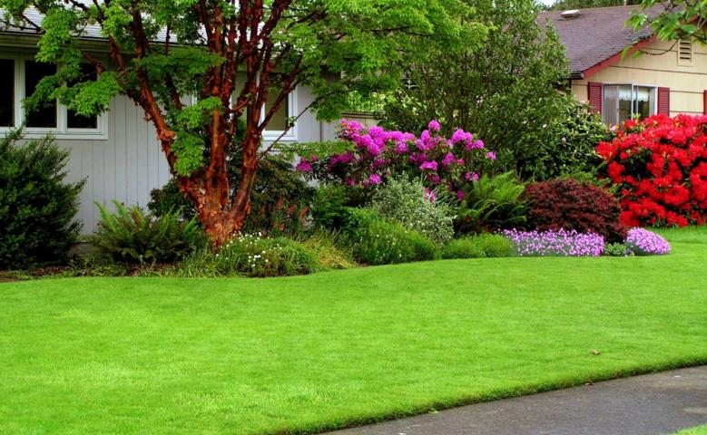 Основные принципы выбора травы и цветов для красивого газона