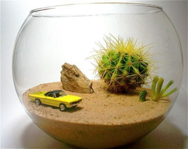пустынный флорариум