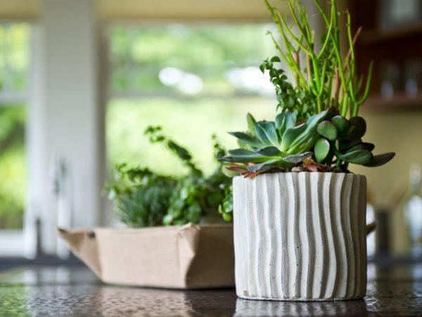неприхотливые растения в красивом горшке