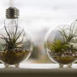 растения в лампочке