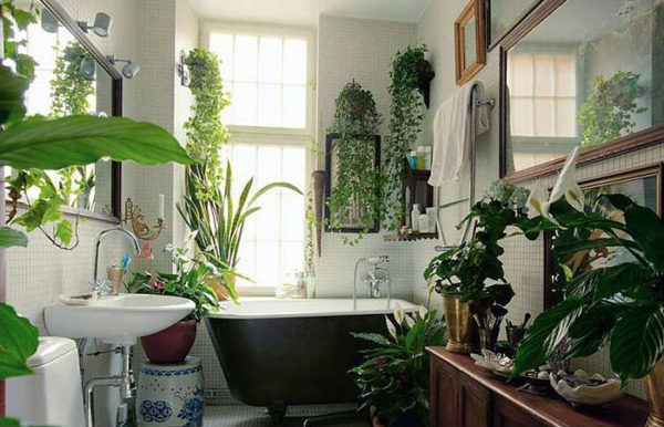 ванна с растениями