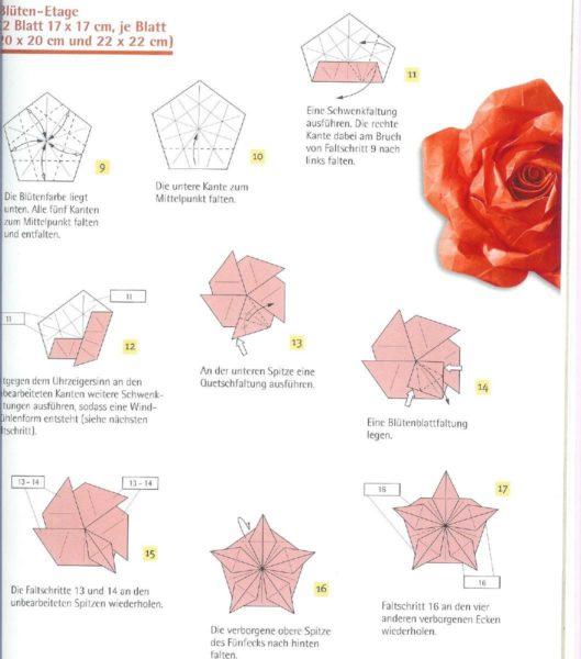 Спиралевидный бутон розы