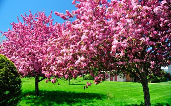 Цветущее абрикосовое дерево в сновидениях говорит о том, что ваши мечтания и надежды далеки от реальности.